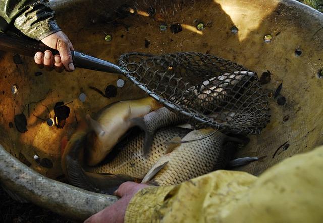 Ryby po výlov