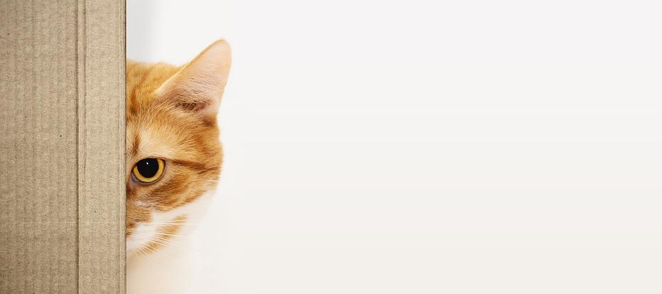 kočka za kartonem
