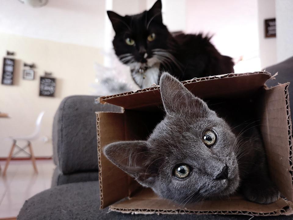kočky v pokoji